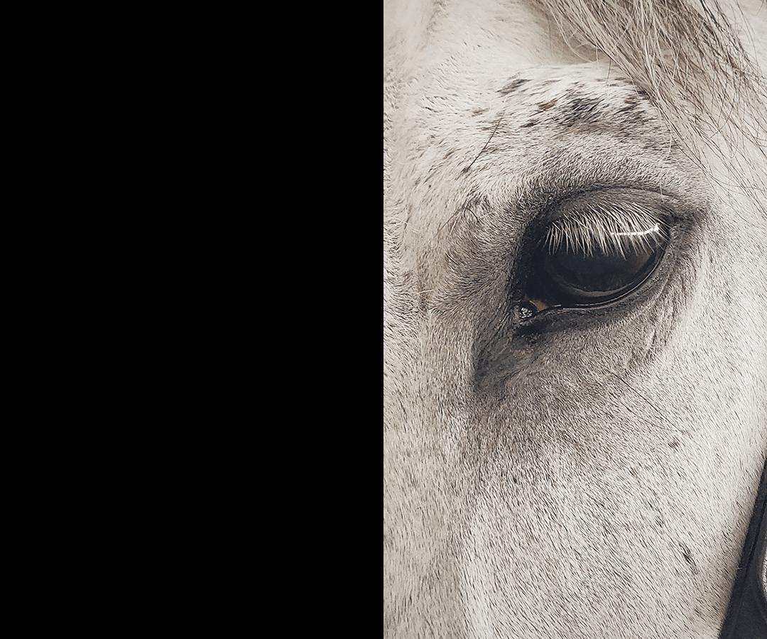 horse2-wrapbg1
